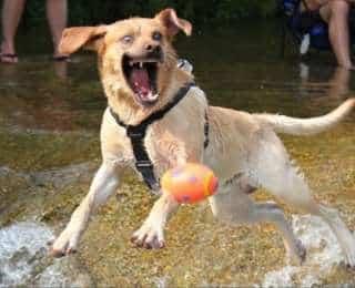 12 photos de chiens prises au bon moment