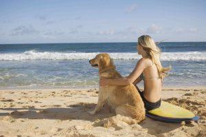 chien à la plage