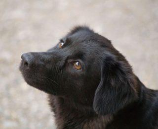 Faire le deuil de son chien perdu ou égaré