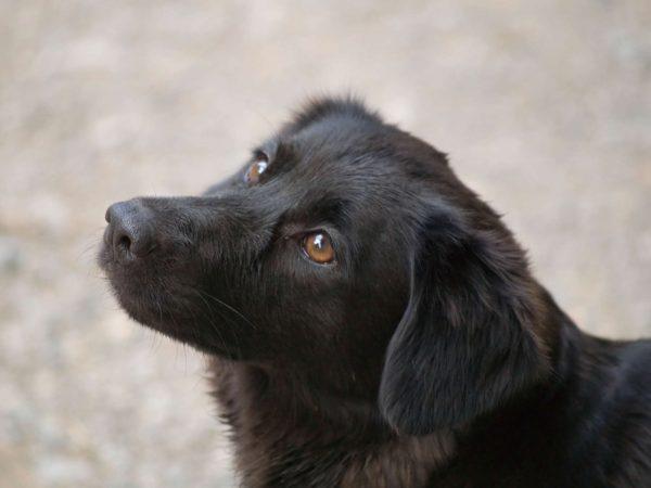 6 conseils pour venir en aide à un chien blessé