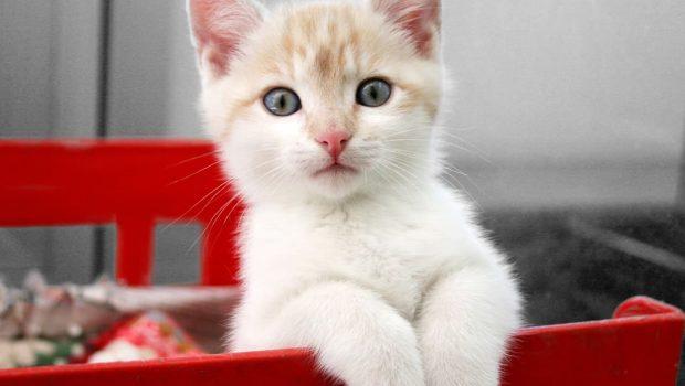 Adopter un chat : 8 questions à se poser avant l'adoption