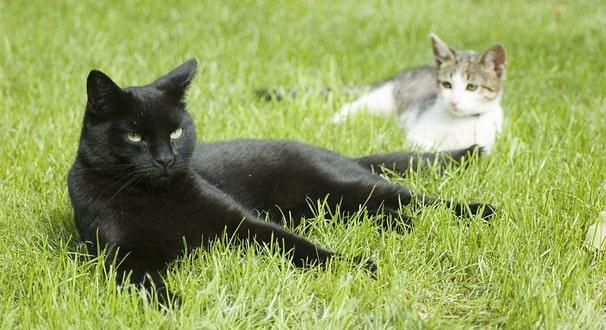 le chat l 39 ext rieur 10 pr cautions prendre. Black Bedroom Furniture Sets. Home Design Ideas