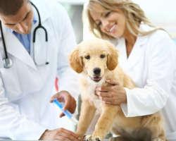 Pourquoi emmener son chiot chez le vétérinaire ?