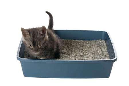 liti re du chat tout savoir pour qu 39 il soit propre. Black Bedroom Furniture Sets. Home Design Ideas
