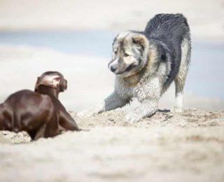 Comprendre les postures de son chien