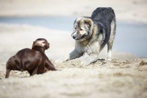 chien dominé