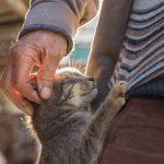 Prendre soin de la santé de son chat