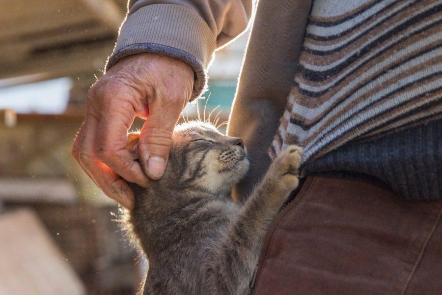 Prendre soin de son chat : les bons gestes à connaître pour sa santé