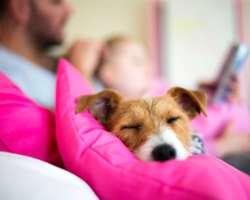 8 conseils à suivre pour prendre soin de ton chien