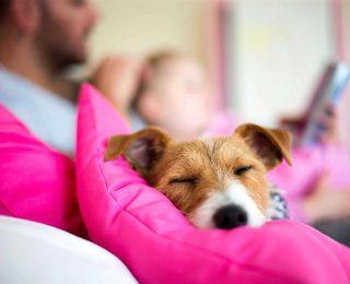 Prendre soin de son chien : les 8 commandements