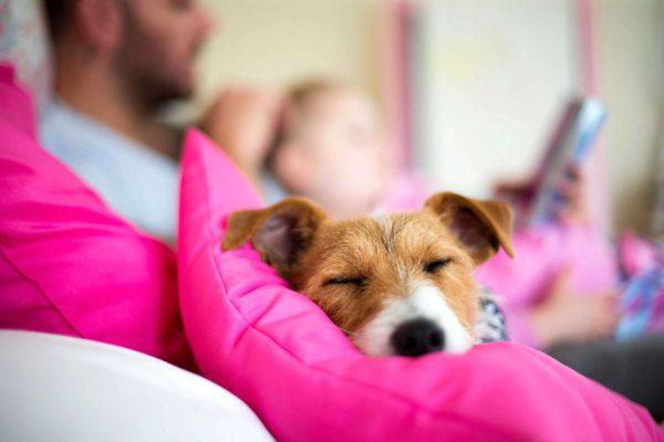 8 façons de prendre soin de son chien