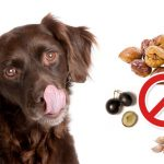 Aliments dangereux pour chien : 12 aliments que vous ignoriez