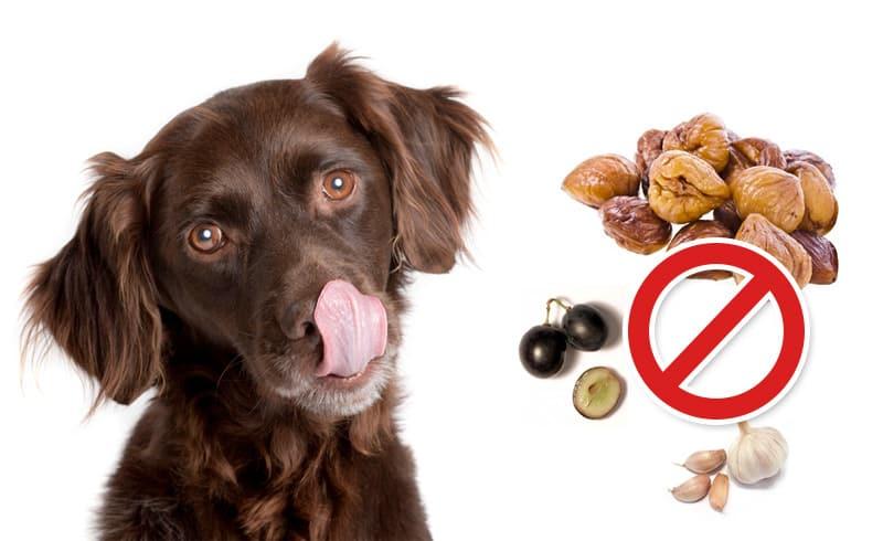 Très 12 aliments dangereux pour chien que vous ignoriez HY32