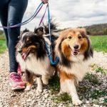 Promener son chien : 9 choses à savoir