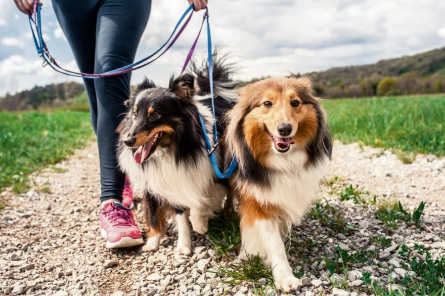 9 Conseils et astuces pour une promenade réussie avec ton chien