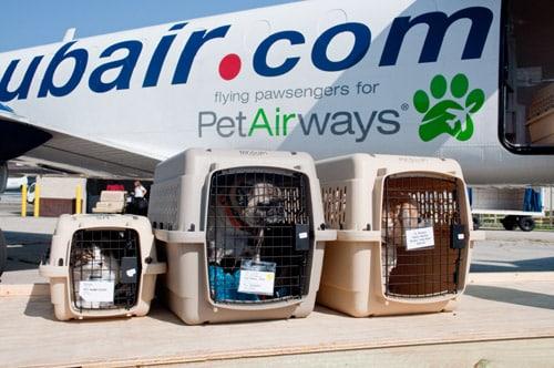 avion-chiens-embarquement