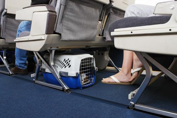 chien-avion-cabine