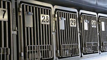 Cages pour chiens dans le bateau
