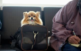 Voyager avec son chien for Small dogs on airplanes