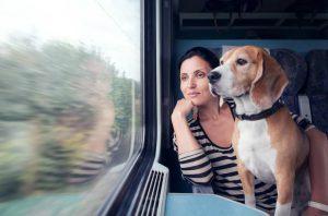 chien voyage en train