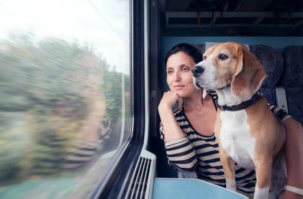 Moyens de transport pour voyager avec son chien