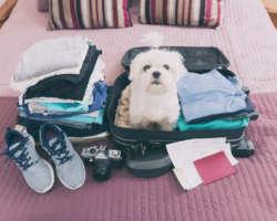Dossier : voyager avec son chien