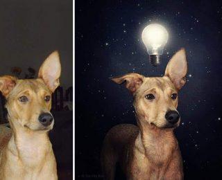 Elle fait des photos surréalistes pour aider des chiens adandonnés à trouver une famille