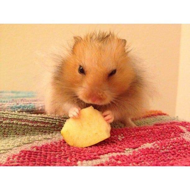 mocha_aime_les_pommes