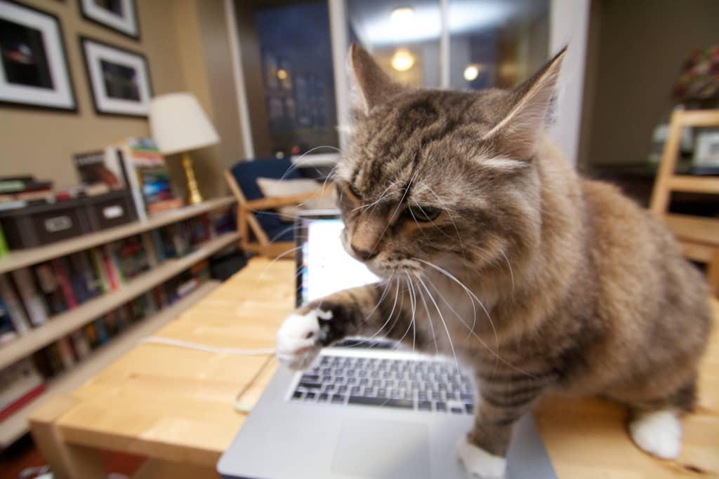 chat qui veut griffer