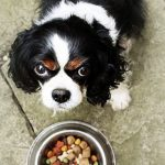 Mon chien ne veut plus manger : que faire ?