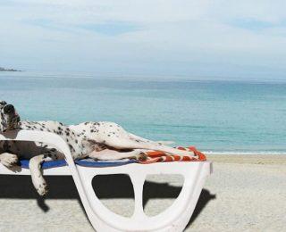 Préparer ses vacances avec son chien