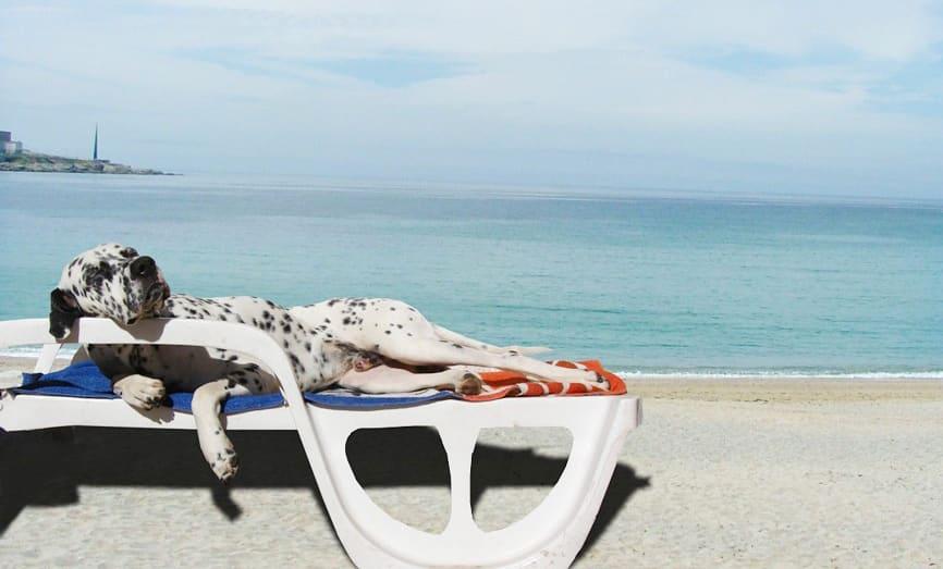 6 précautions à prendre en vacances avec son chien ou son chat