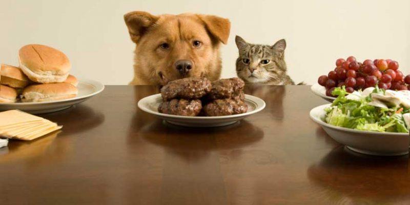 Le chien peut-il manger comme nous ?