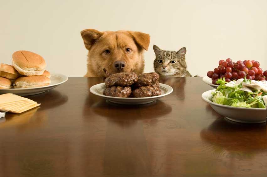 chiens et chats doivent ils manger  me nous