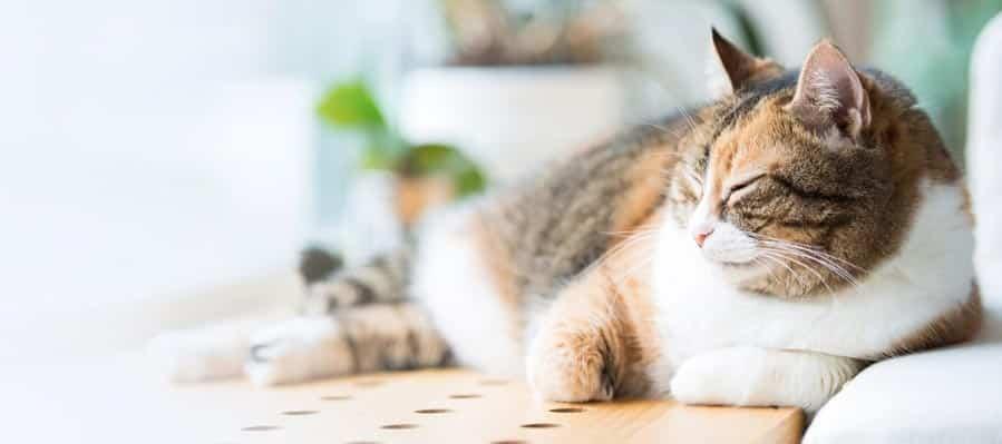 5 solutions pour faire garder son animal