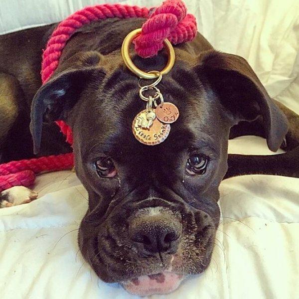 Quelle médaille acheter pour son chien ?
