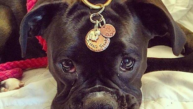 Les médailles pour chiens