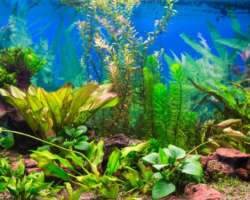 Nettoyer son aquarium : quand et comment
