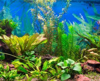 Nettoyer et entretenir son aquarium