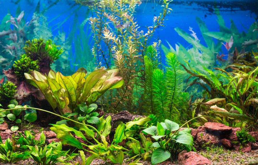 Comment nettoyer son aquarium for Entretien aquarium