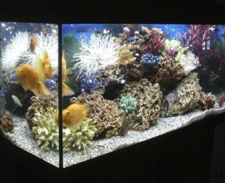 Bien choisir l'éclairage de son aquarium