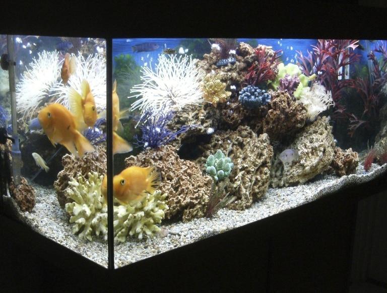Quel éclairage choisir pour ton aquarium ?
