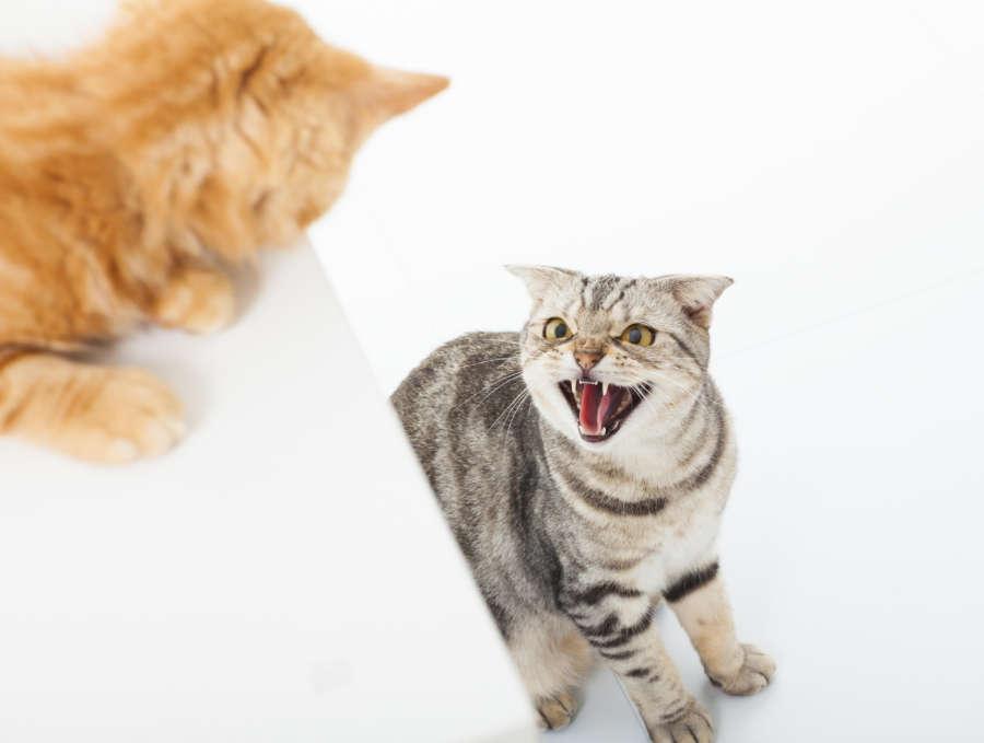 Pourquoi mon chat crache / feule ? Que signifie ce