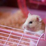 Bien choisir la cage de son hamster