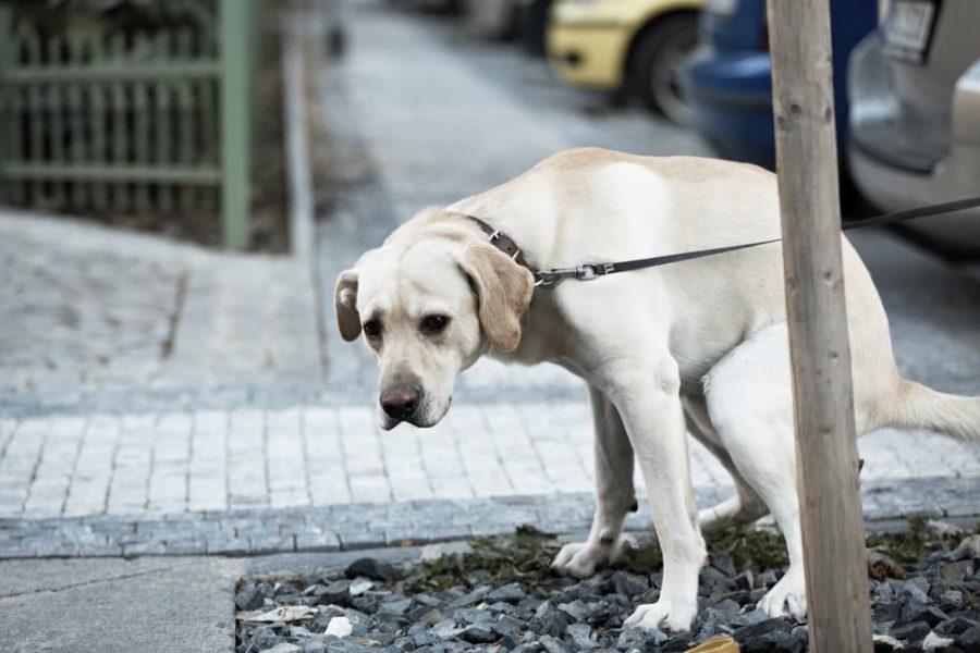 Les crottes de chien en ville