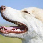 Mon chien a mauvaise haleine, que faire ?