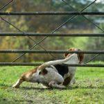 Mon chien fugue, que faire ?