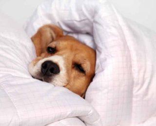 Que faire si mon chien attrape froid ?