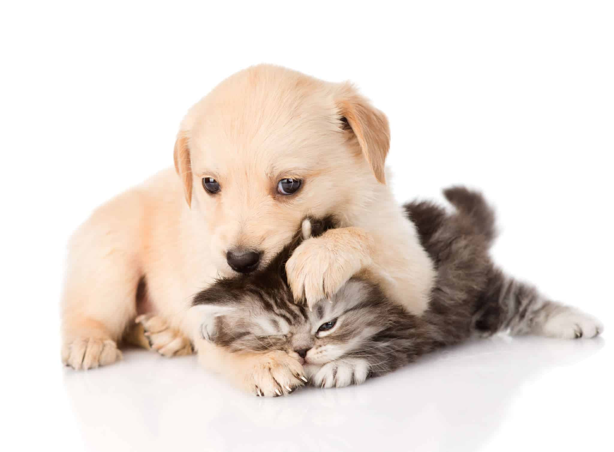 6 conseils pour stopper les b tises de votre chiot autour des animaux. Black Bedroom Furniture Sets. Home Design Ideas