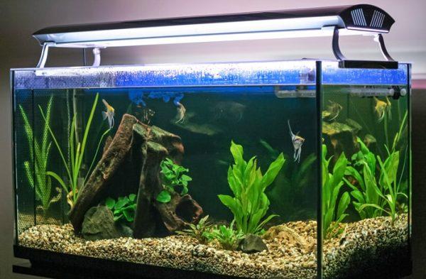 Préparer son aquarium avant de partir en vacances